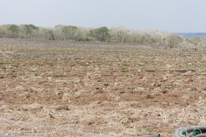 Arreglos topol gicos plataforma tecnol gica agr cola for Factores para seleccionar el terreno para el vivero