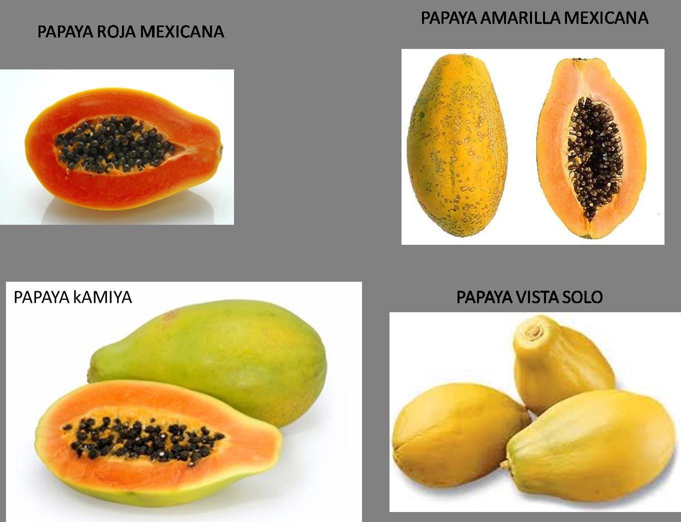 Papaya strategy forex