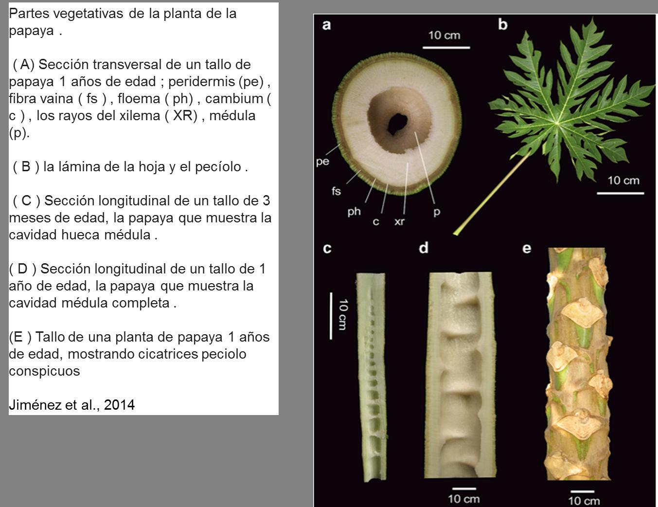 Fisiología - PLATAFORMA TECNOLÓGICA AGRÍCOLA PARA EL CULTIVO DE ...