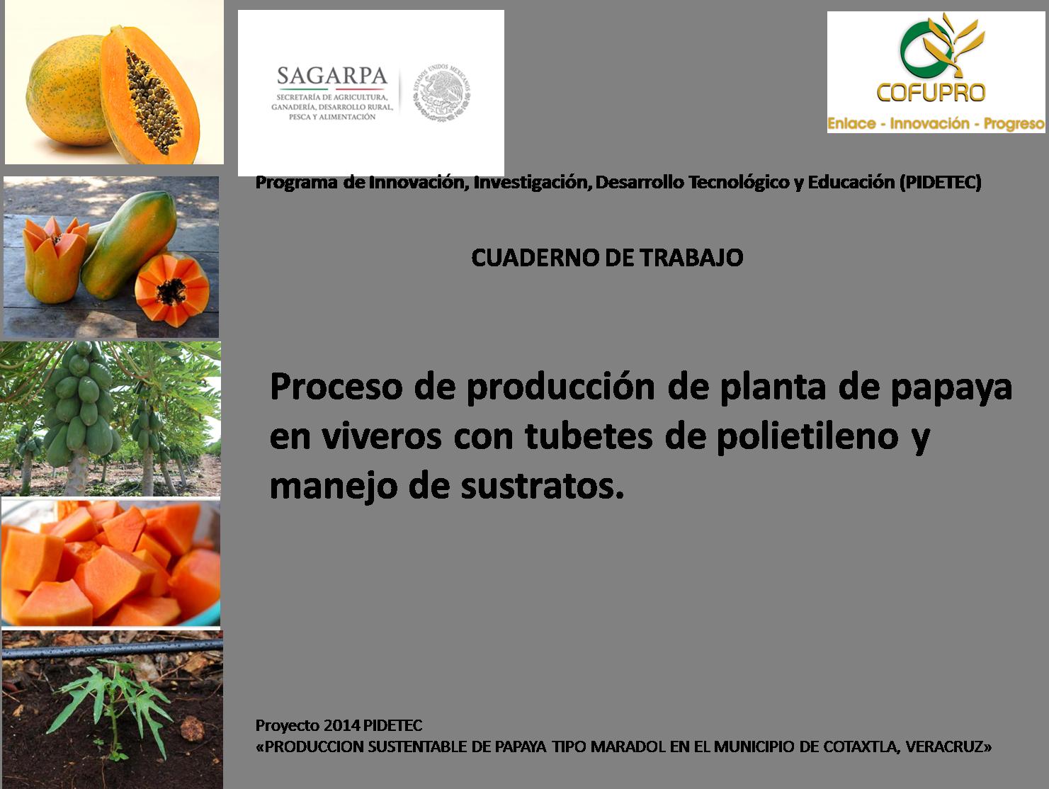 Producci n de planta de papaya en vivero o bioespacio en for Produccion de plantas en vivero pdf