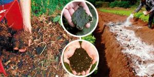 portada_tipos_de_fertilizante