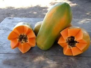 pro-papayita